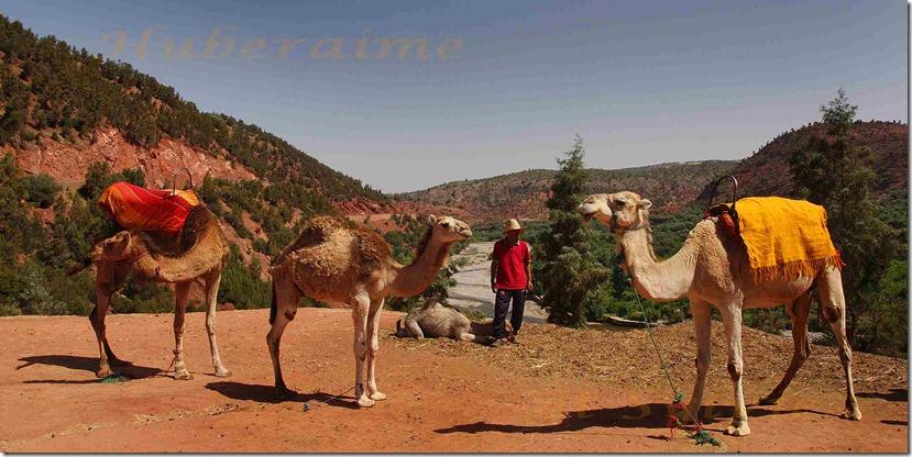 af-Maroc Excursion Vallée de l'Ourika 05.06.2016a
